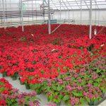 ar-ziediem-holande